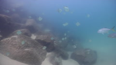 Ocean scenery on river mouth rock wall, HD, UP31512 Stock Footage