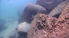 Surge, friendship bracelet tangled in fishing line and grass, underwater, marine Stock Footage