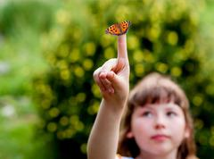 Little girl looks at a butterfly. Aglais urticae L. - stock photo