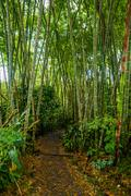 Stock Photo of Small walking path through tight green vegetation on both sides in Amazon jungle