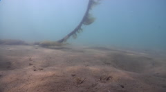 Ocean scenery houseboat mooring rope dragging along the bottom slowly, camera Stock Footage