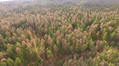 Coniferous forest in the spring season Stock Footage