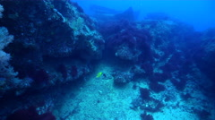 Ocean scenery cracks and crevices, on rocky reef, HD, UP31653 Stock Footage