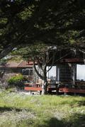 Stock Photo of Asilomar, California State Parks, natural habitat
