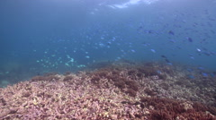 Ocean scenery on shallow coral reef, HD, UP31696 Stock Footage