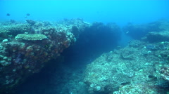 Ocean scenery swimthroughs and overhangs, caves, on rocky reef, HD, UP31729 Stock Footage