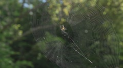 SPIDER WEB SWAYING WITH SPIDER Stock Footage