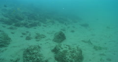 Lots of fish fleeing, swimming against strong current in very poor visibility. - stock footage