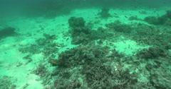 Ocean scenery tragic scene of vast areas of dead coral. - stock footage
