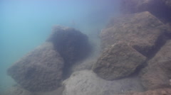 Ocean scenery tracks perch after swimover, on river mouth rock wall, HD, UP31846 Stock Footage