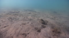 Ocean scenery on sand and sea weed, HD, UP31860 Stock Footage