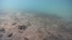 Some immature sea grass, underwater, marine pollution, HD, UP31861 - stock footage