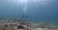 Buddy team of scuba divers diving on very shallow reef and surface in Solomon Stock Footage