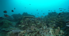 Ocean scenery high biodiversity of fish gently swaying with the surge, on deep Stock Footage
