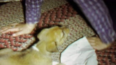 1967: Cute puppy tears paper napkin towel to shreds. - stock footage
