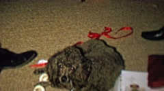1961: Loving poodle dog comes to master for needed petting. - stock footage