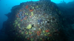 Ocean scenery very minor movement, on rocky reef, HD, UP31931 Stock Footage