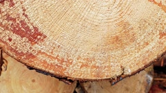 Cross section of the tree. Stock Footage