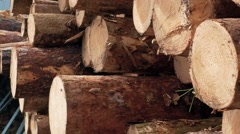 Pine logs of different lengths. Stock Footage