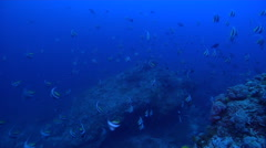 Schooling bannerfish swimming and schooling on rocky reef, Heniochus diphreutes, Stock Footage