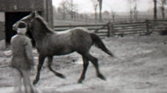1938: Man rope training wild horse run circles country farm. Stock Footage