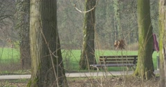 The Adult Man Walks in the Central Park of a City of Opole (Poland) Stock Footage