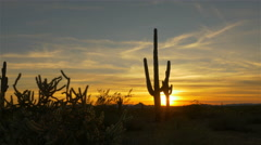 Golden sun setting behind large cactus silhouette in western America Stock Footage