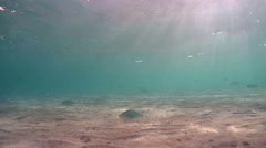 School of fish in shallow water rushes, Red sea, Marsa Alam, Abu Dabab, Egypt - stock footage