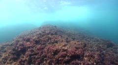 Ocean scenery camera moving with heavy surge, algae covered rocks, on rocky Stock Footage