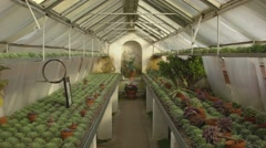 Cold Glasshouse in the castle park in Bad Homburg Stock Footage