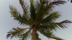4K video of plane through palm tree at daybreak in Miami, Florida Stock Footage