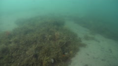 Ocean scenery camera stops briefly on sand patch, on sand and sea weed, HD, Stock Footage