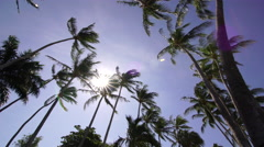 Costa Rica Tropical Palm Tress and Blue Sky Stock Footage