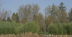 Rural Landscape High Green Trees Stones Blue Sky on Background Park and Lawns Stock Footage