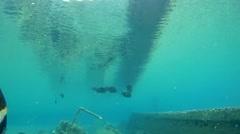 Red Sea sailfin tangorDesjardin's sailfin tang(Zebrasoma desjardinii) Stock Footage