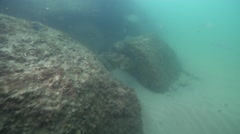 Discarded fishing tackle on river mouth rock wall, Orange-spotted grouper, HD, Stock Footage