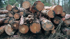 Forest logging site. Piles of log, forest clean up works after a storm, logging. Stock Footage