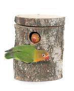 Bird nest box and lovebird Kuvituskuvat