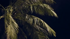 Looking up at Palm Tree on the beach Stock Footage