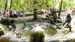 Monkeys are frolicing in the pool, Ubud, Bali. Stock Footage