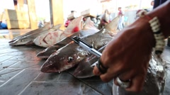 Sharks waiting to be finned at market Stock Footage