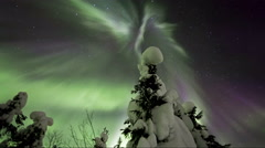 Northern lights above tree: corona is formed. Stock Footage