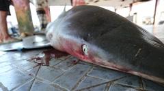 Close up of shark eye at market Stock Footage