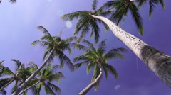 Costa Rica Tropical Palm Trees and Blue Sky 120FPS Stock Footage