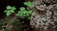 Plants in Construction Zone Stable Shot 4 Stock Footage