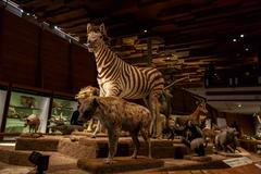 Animals at National Museum - stock photo