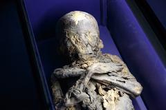 Human Body Skeleton - stock photo