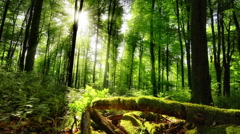 The sun casts its enchanting rays into the green forest Stock Footage