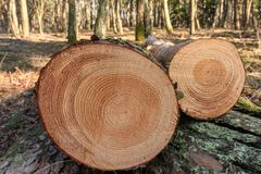 Cut trees in the forest Stock Photos