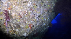 Ocean scenery exploring the roof and walls of a huge cavern with black corals Stock Footage
